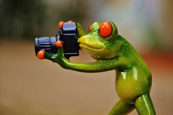 frog-camera