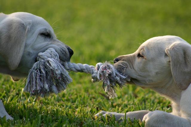 puppy-1647692_640