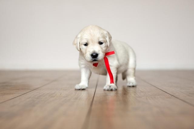 wide-plank hardwood floor with puppy