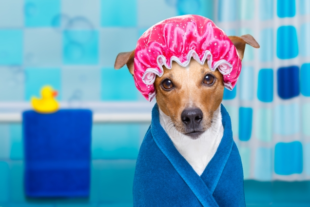 dog in bathroom with shower cap