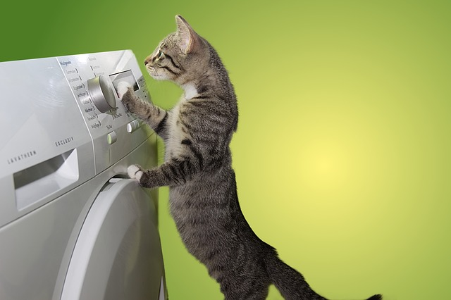 cat and dryer